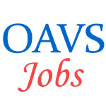 Principals and Teachers Jobs in OAVS