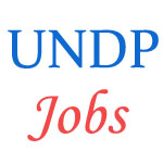 UNDP Job positions - Odisha Government